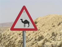 Thanks to travelmania.com ariel kirtchuk - camel warning sign