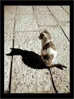 Just me and my shadow - gilad benari
